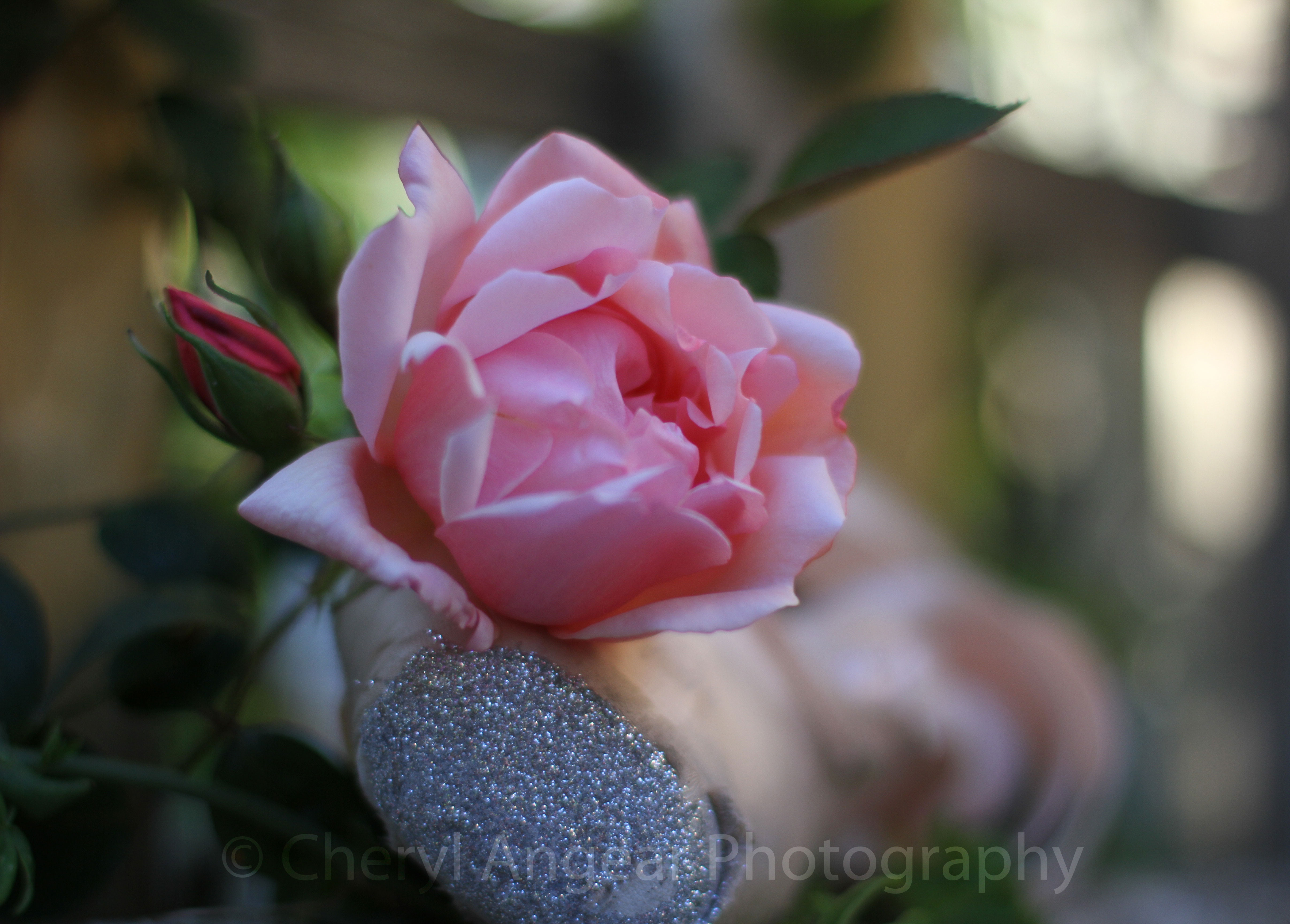 Photograph by Cheryl Angear Photography