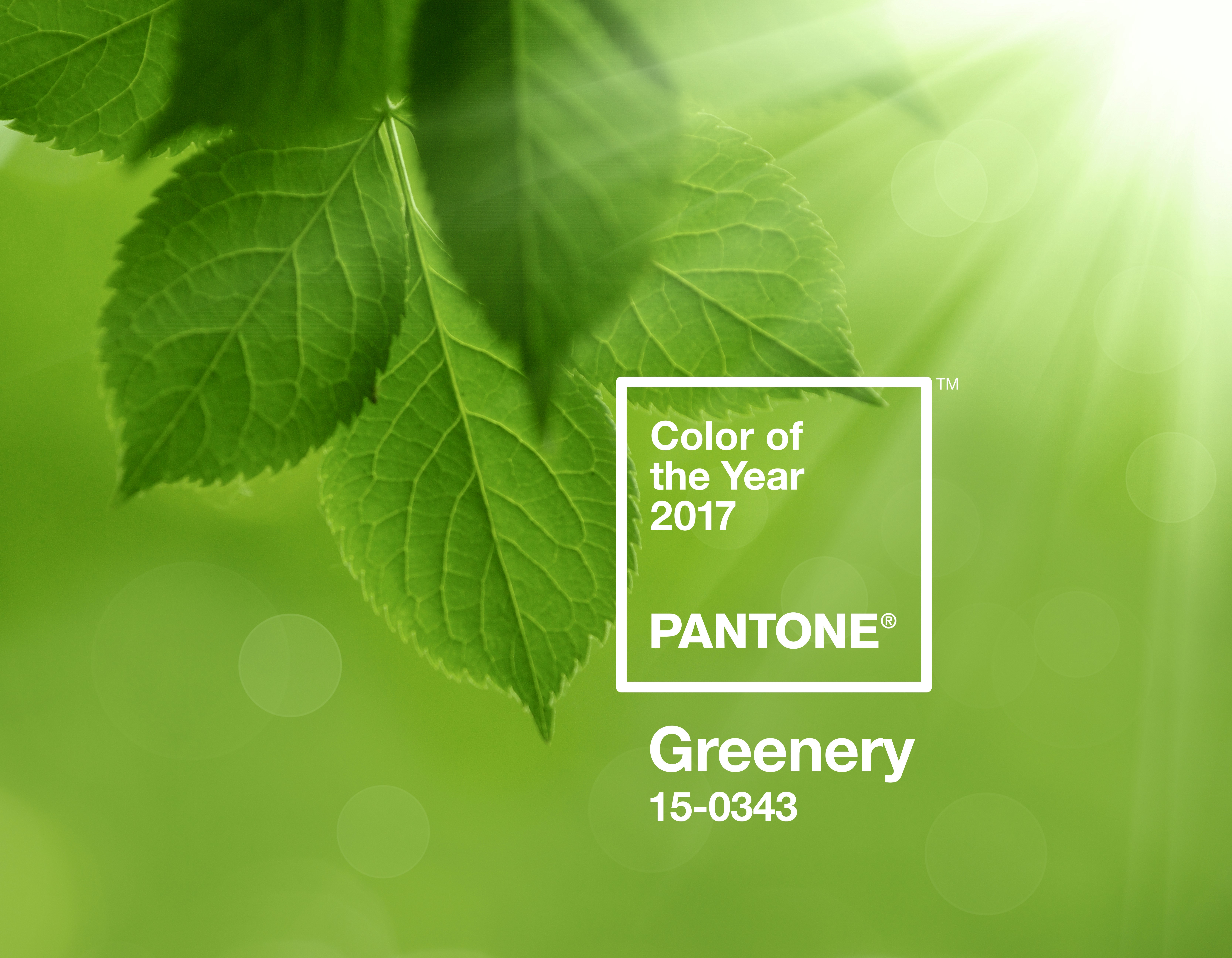 pantone colour of the year 2017 greenery